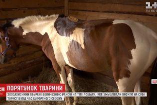 В Одессе жеребенок стал инвалидом из-за того, что его заставляли катать туристов