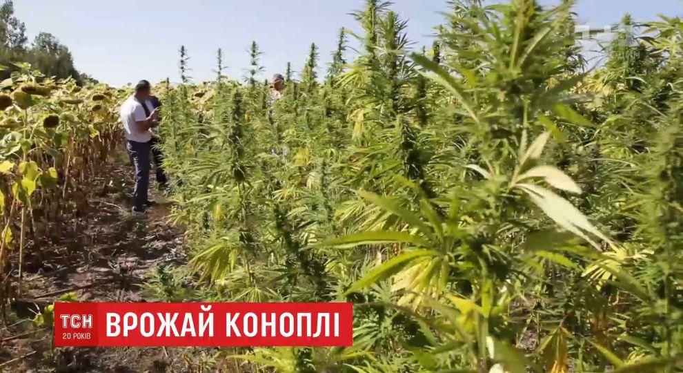 Конопля видео роста картинки дым марихуана