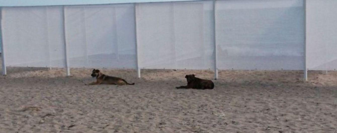 В Євпаторії пляж для нудистів загородили прозорою ширмою, місцеві мешканці обурені