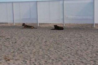 В Евпатории пляж для нудистов загородили прозрачной ширмой, местные жители возмущены