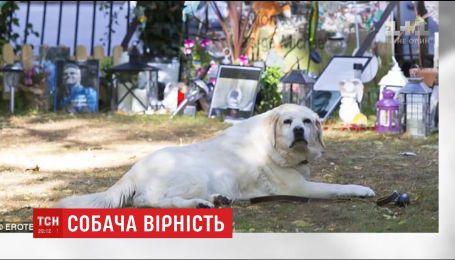 Собачья скорбь: лабрадор Джорджа Майкла до сих пор ждет своего хозяина возле его могилы