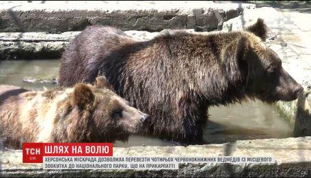 Четверо краснокнижных медведей переедут из Херсона в национальный парк на Прикарпатье