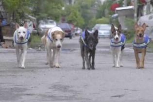 У Таїланді безпритульні собаки за допомогою технологій стануть помічниками поліцейських
