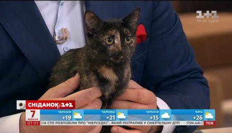 Кішечка Тіна шукає люблячих господарів
