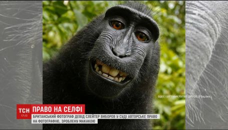 Фотограф выборол в суде авторское право по селфи обезьяны