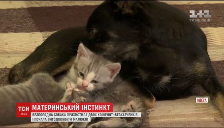 Материнський інстинкт: на Одещині стерилізована собака змогла вигодувала знайдених кошенят