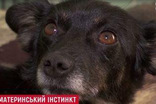 В Одессе собака выкормила молоком двух котят