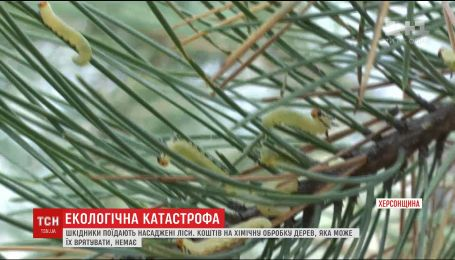 Экологическая катастрофа: 18 тысяч гектаров леса на Херсонщине под угрозой тотального уничтожения
