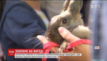 Столичный зверинец на день переехал в Охматдет, чтобы дети отвлеклись от лечения