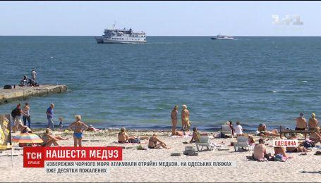На одесских пляжах отдыхающих атакуют медузы-корнероты