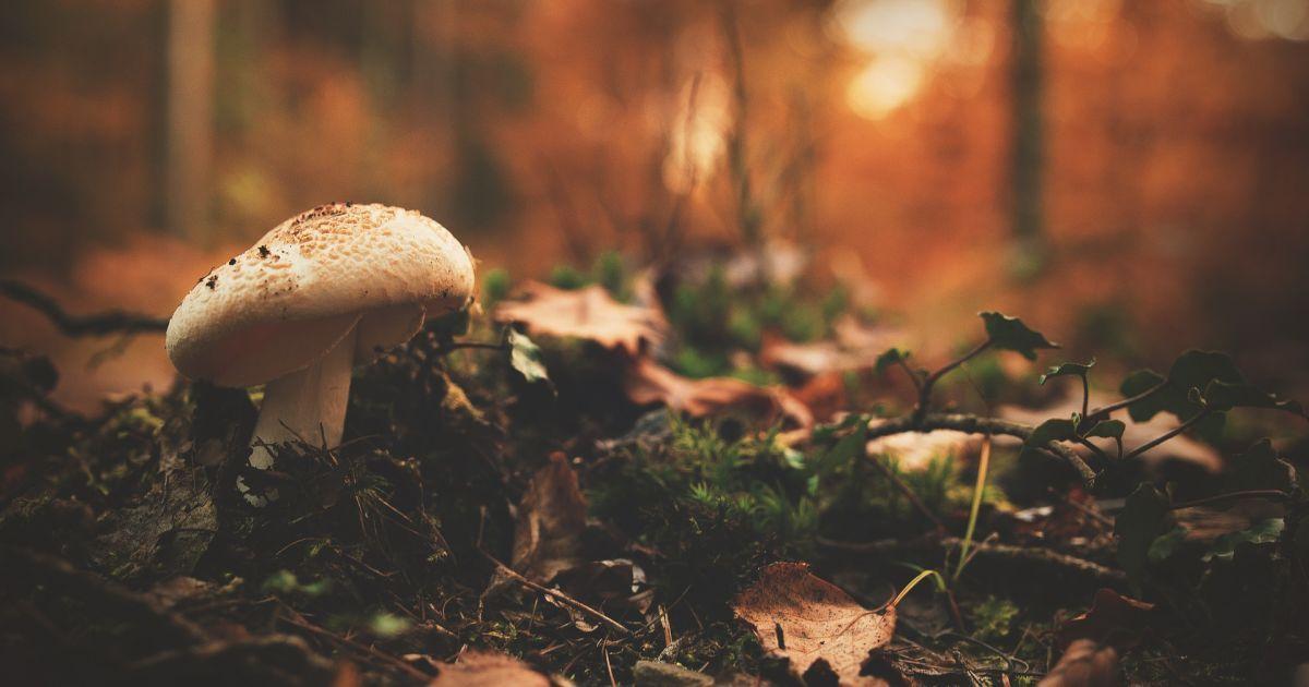 Собрал и съел: в Днепропетровской области ребенок отравился грибами