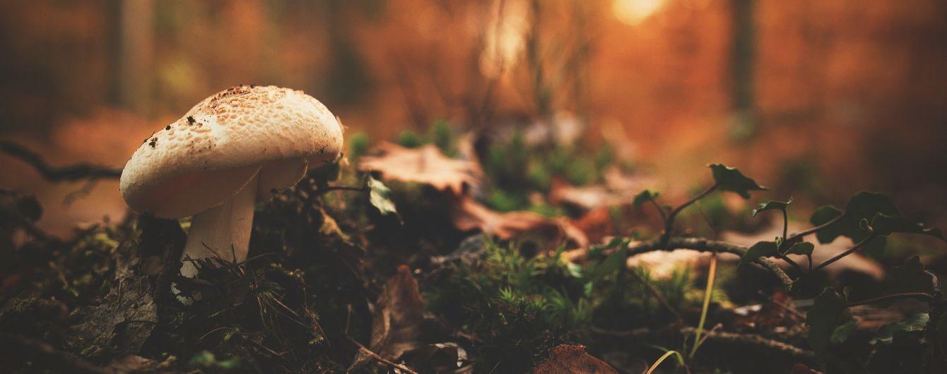 Радіоактивні гриби у Франції виявилися не російськими, а білоруськими
