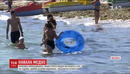 В Одессе призывают отдыхающих быть осторожными из-за атаки опасных медуз