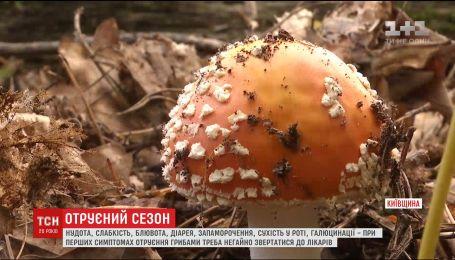 Опытные грибники рассказали, какие грибы можно собирать и как защититься от отравления