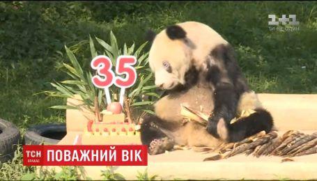 Панда Синь-Син отметила 35-й день рождения