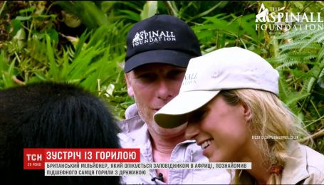 Мільйонер наважився познайомити свою дружину з небезпечним самцем горили