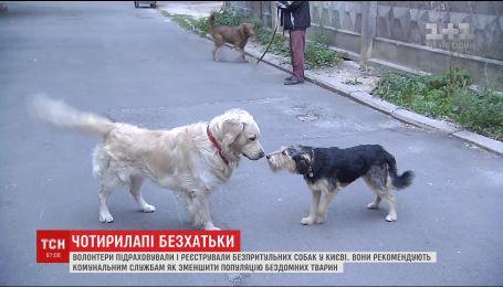 Волонтери перевірили ефективність роботи комунальних служб щодо безпритульних собак