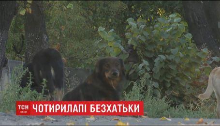У столиці волонтери намагалися вирахувати популяцію безпритульних собак