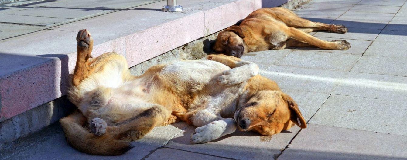 В Чернигове на выставке беспородных собак определяли самую верную
