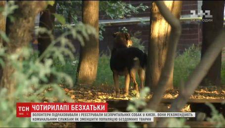 За три дні у Києві волонтери нарахували понад три тисячі бродячих собак