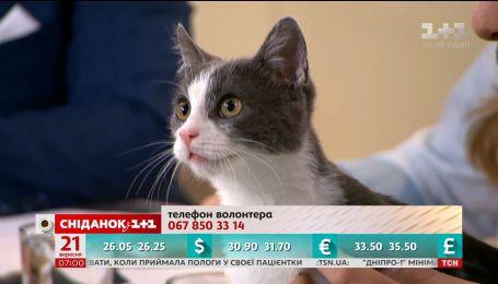 Котик Джек ищет любящую и заботливую семью