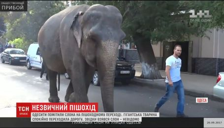 Величезний слон влаштував прогулянку вулицями Одеси