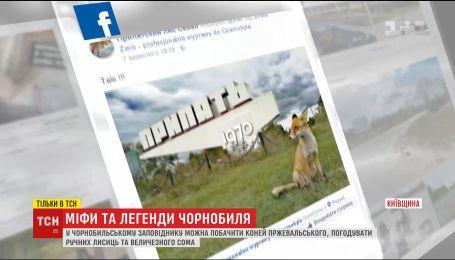 ТСН собрала новые самые страшные легенды и мифы о Чернобыле