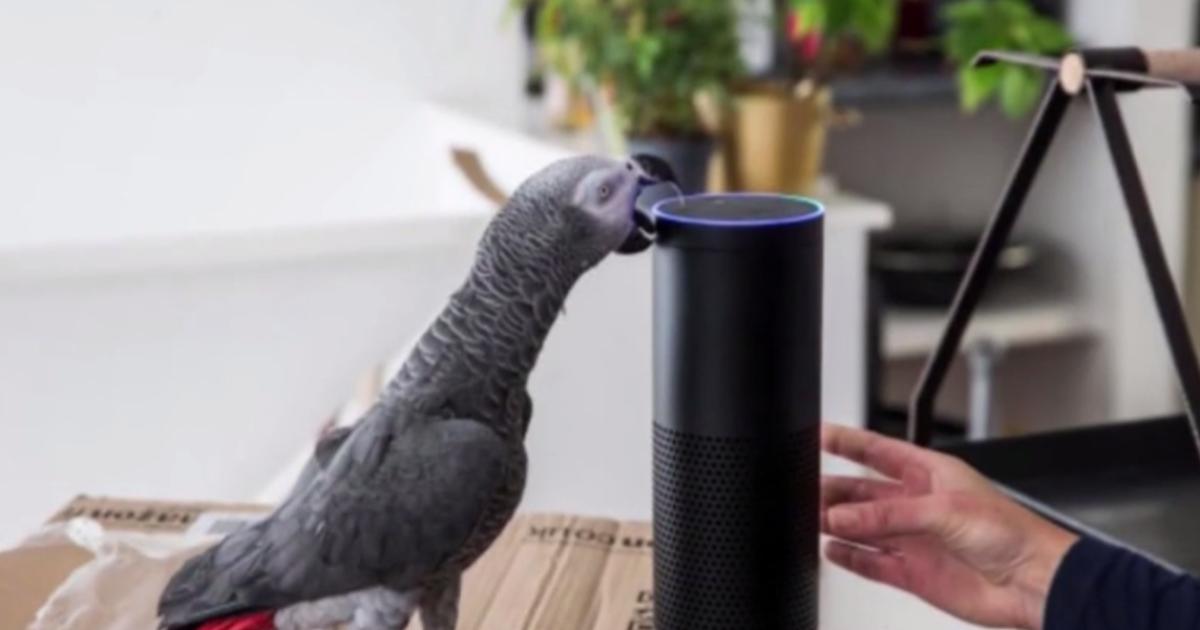 У Британії розумний папуга нишком від господарів зробив Інтернет-замовлення