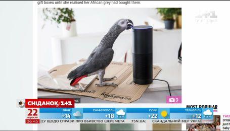 В Британии попугай сделал покупку в интернет-магазине