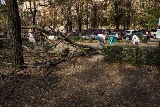 В Киеве для коммунальщиков провели мастер-класс по правильной обрезке деревьев