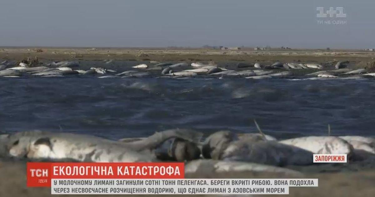 Экологическая катастрофа на Запорожье: в Молочном Лимане погибли сотни тонн пеленгаса