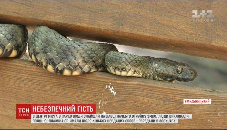 Большая змея в одном из парков Хмельницкого напугала местных жителей