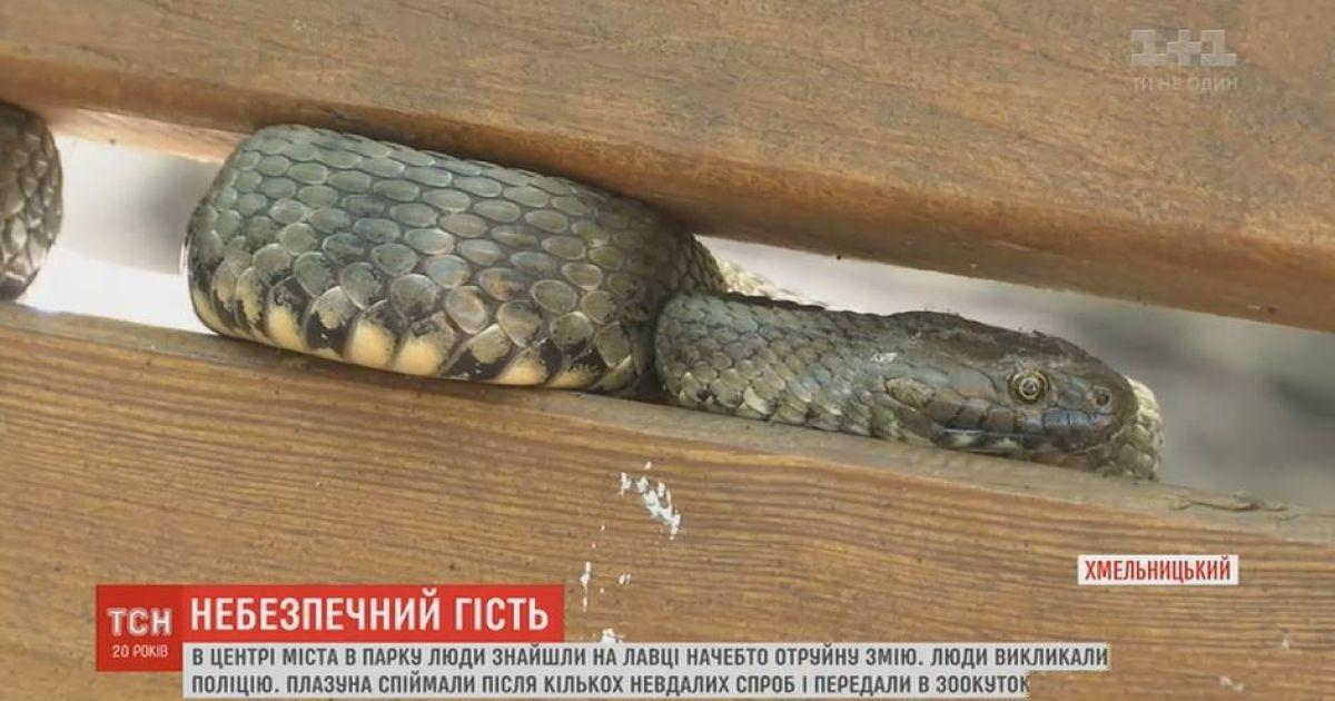 Почти метровая змея напугала прохожих в парке Хмельницкого
