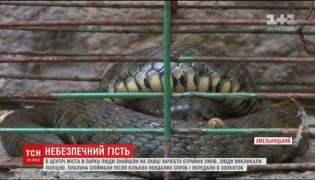 Небезпечний гість: у центрі Хмельницького люди знайшли велику змію