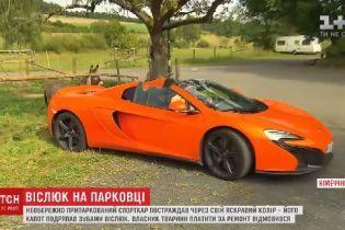 Владелец роскошного Макларена подал в суд на владельца осла, который погрыз его машину