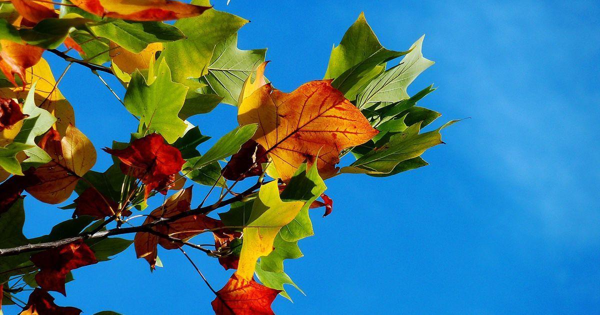 Льготы на отопление и дополнительный выходной: что украинцам принесет октябрь