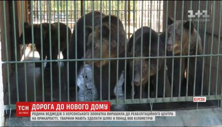 Долгое путешествие: семья медведей из зоопарка Херсона отправилась в Прикарпатье
