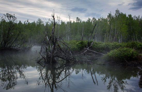 52-річний чоловік застряг у столичному болоті