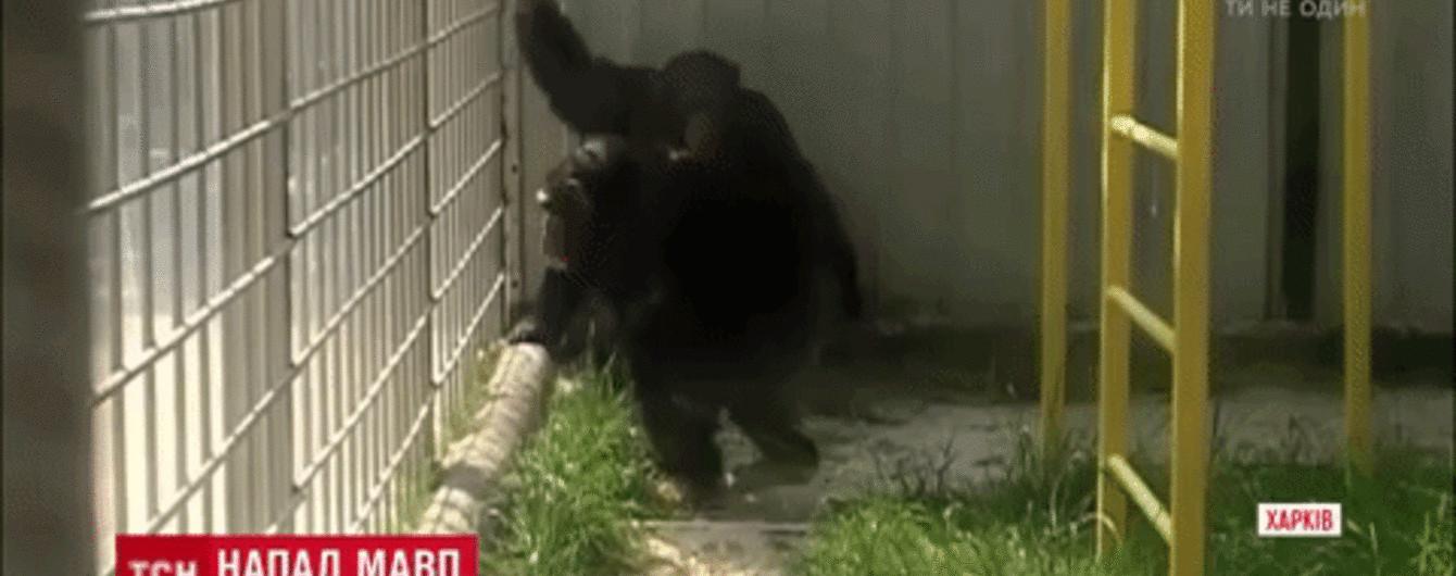 Стало відомо, чому мавпи в екопарку в Харкові відгризли пальці й вухо своєму доглядальнику