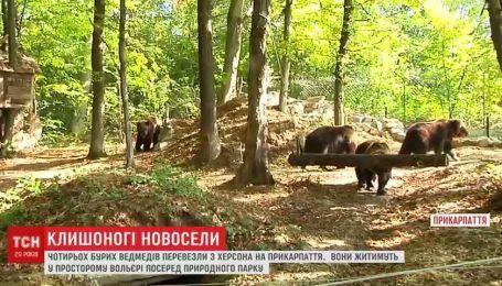 Особое меню и развлечения: медведицу Дину с тремя детьми перевезли в новый дом на Прикарпатье
