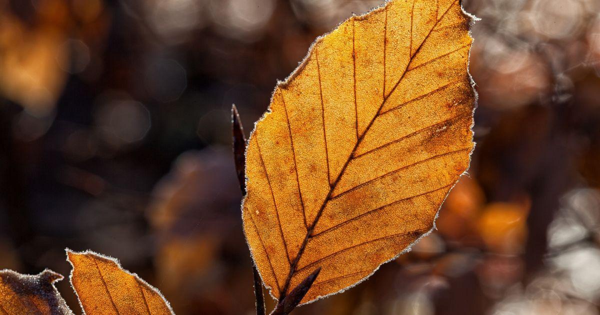 Неделя начнется без осадков. Прогноз погоды на 2 октября