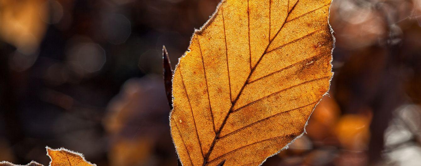Тиждень почнеться без опадів. Прогноз погоди на 2 жовтня