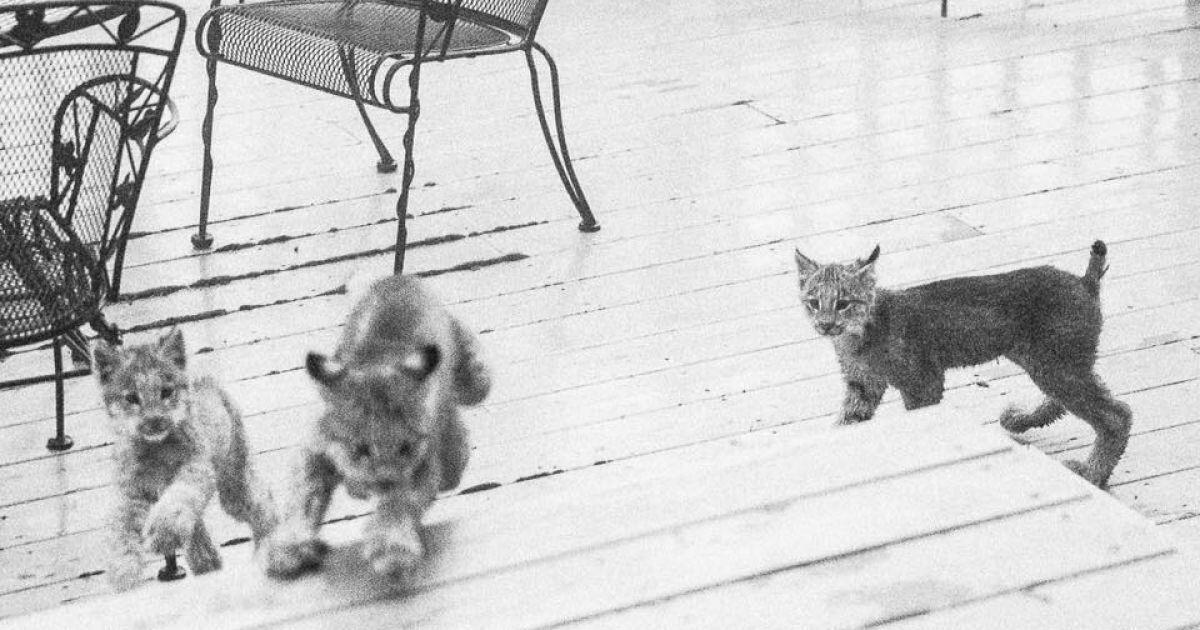 Семеро котят долгое время играли на крыльце.