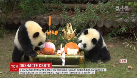 В Китае панды с шиком отпраздновали день рождения