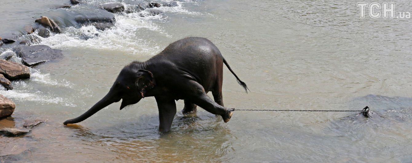 На Шри-Ланке три дня спасали слона из колодца