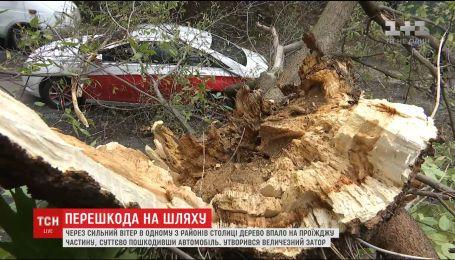 В центре Киева гнилое дерево упало на машину