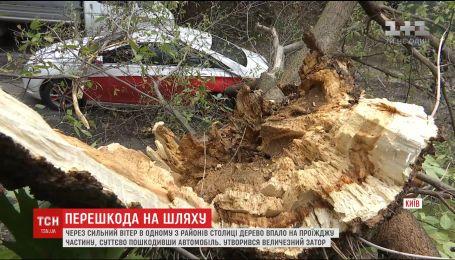 На столичной Татарке гнилое дерево упало на дорогу и повредило легковушку