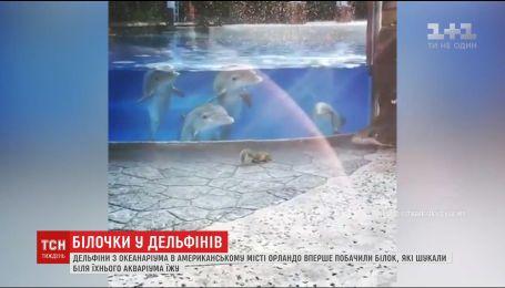 Дельфіни із американського парку розваг вперше побачили білок, які шукали їжу біля акваріуму
