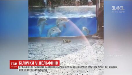 Дельфины из американского парка развлечений впервые увидели белок, которые искали еду у аквариума