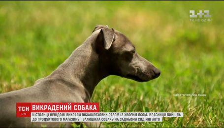 В Киеве неизвестные похитили дорогой внедорожник вместе с больной собакой